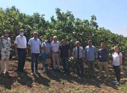 (Turkish) İncir Yetiştiriciliği Uygulamalı Çiftçi Okulu (UÇO)